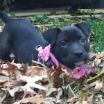Abbie: NC Abandonment Rescue