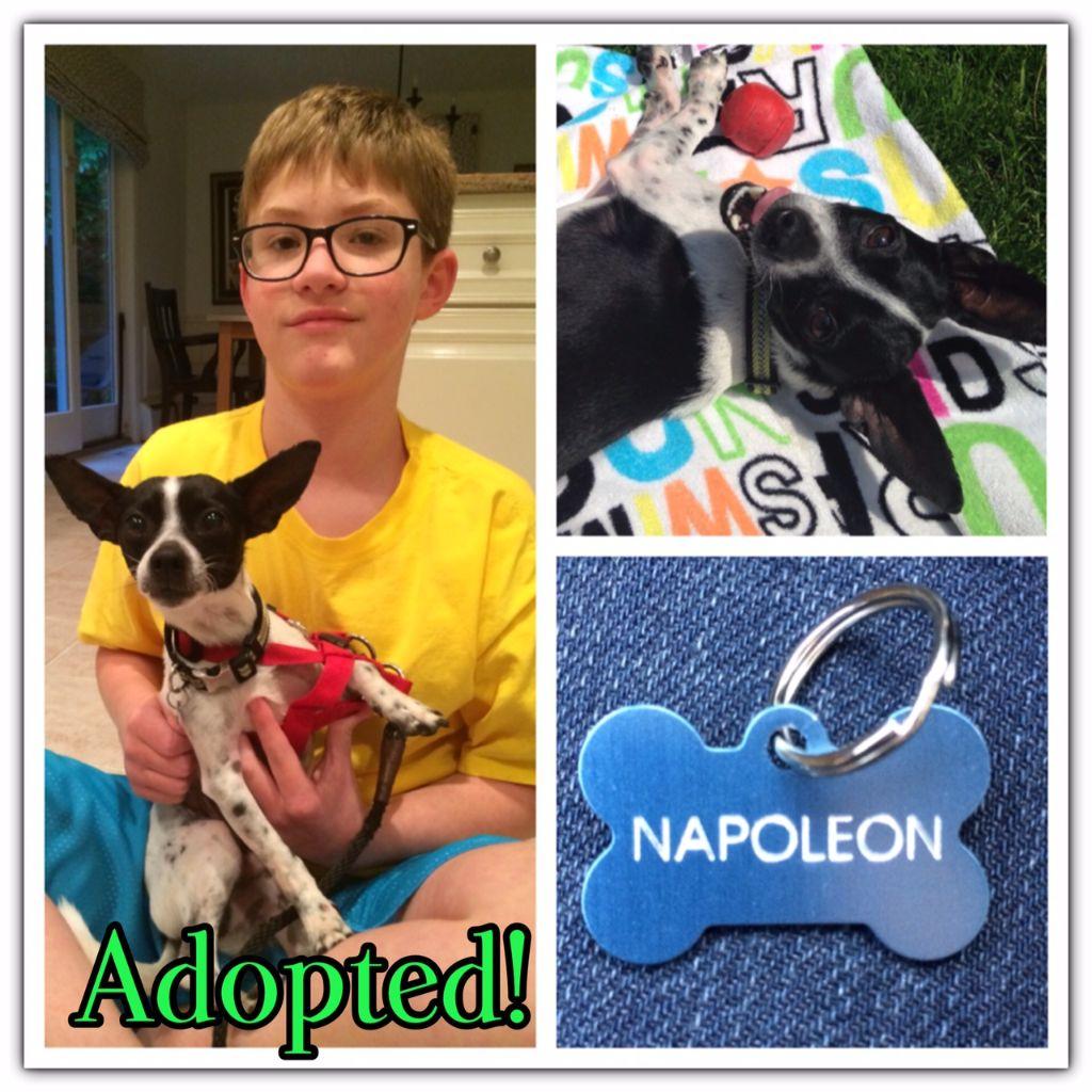 Nap adopted