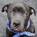 Sinatra: NYC ACC Pull