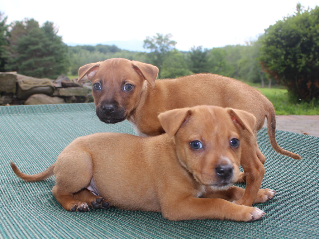 Coney Island Puppies: ADOPTED! | Mr Bones & Co
