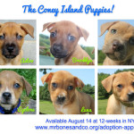 Coney Island Puppies: ADOPTED!