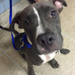 Bubba: NYC ACC Pull