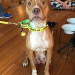 Sadie: NC Nursing Mama Rescue