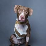 Jasper: NYC Abandonment
