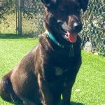 Lucy: ADOPTED!