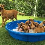 Nana & Peter Pan Puppies: ADOPTED